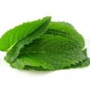 Mint E Juice